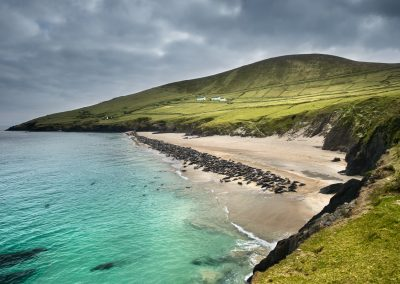 great_blasket_island_grey_seal_colony_ireland